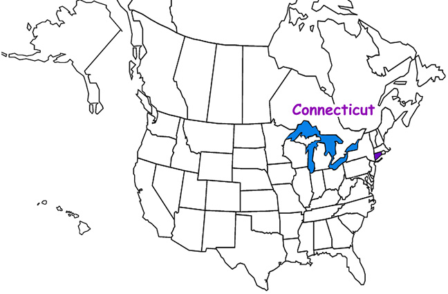 Connecticut Habitats Mammals Birds Amphibians Reptiles