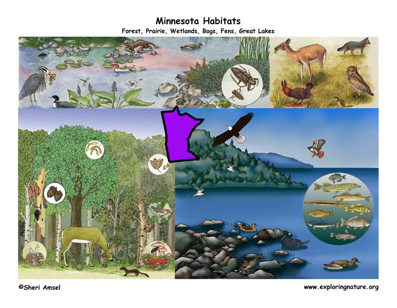 Minnesota habitats poster