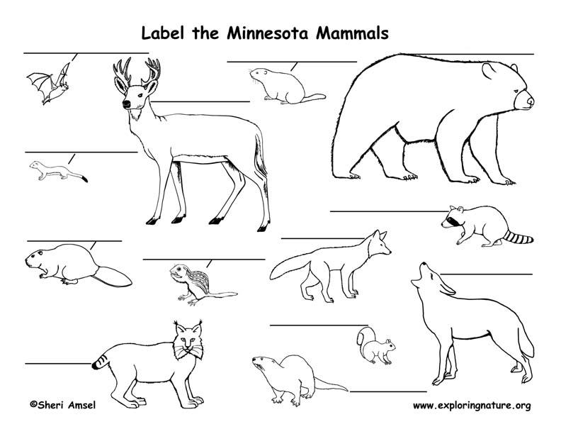 Minnesota mammals labeling