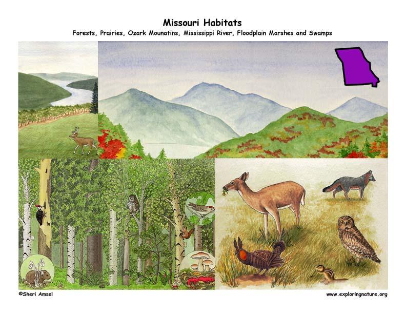 Missouri habitats poster