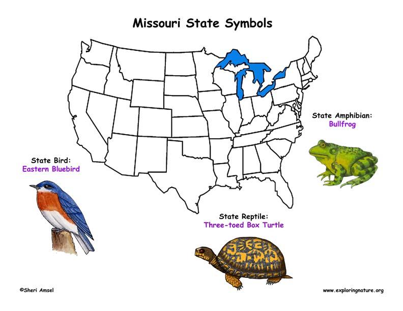 Missouri Habitats Mammals Birds Amphibians Reptiles