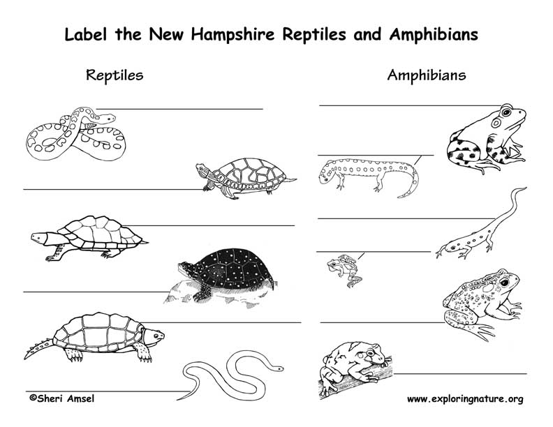 New Hampshire Amphibians and Reptiles labeling