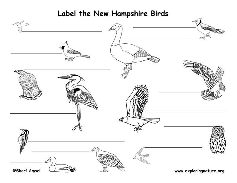 New Hampshire birds labeling