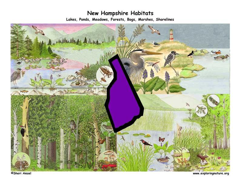 New Hampshire habitats Poster