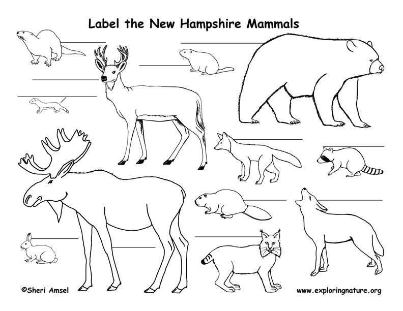 New Hampshire mammals labeling