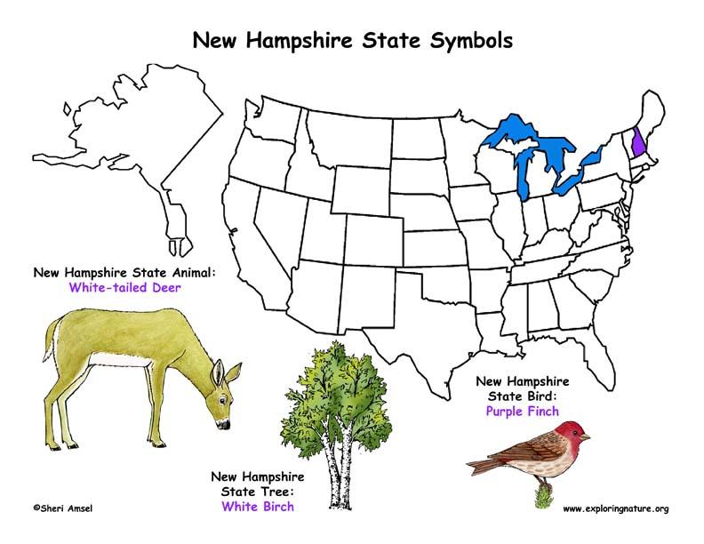 New Hampshire Habitats Mammals Birds Amphibians Reptiles