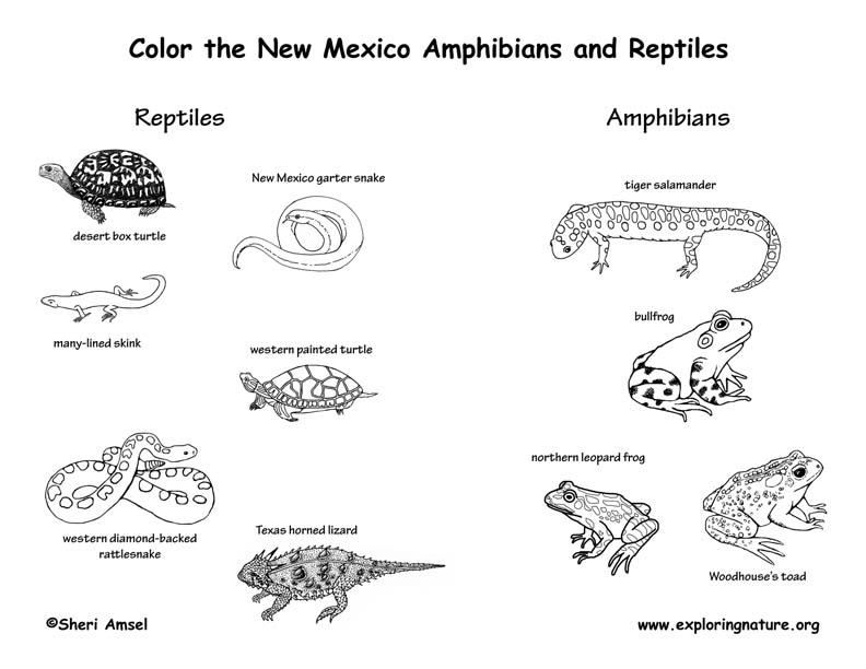 Vertebrate Animals Coloring Pages : New mexico