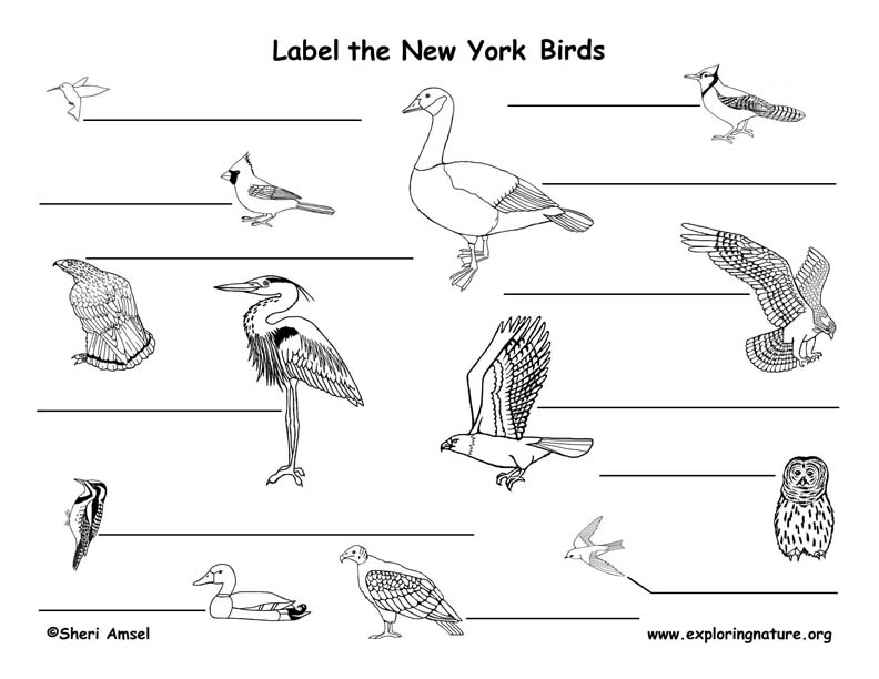 New York birds labeling
