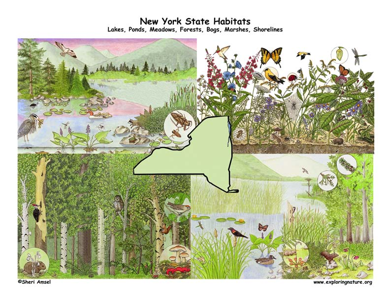 New York habitats poster