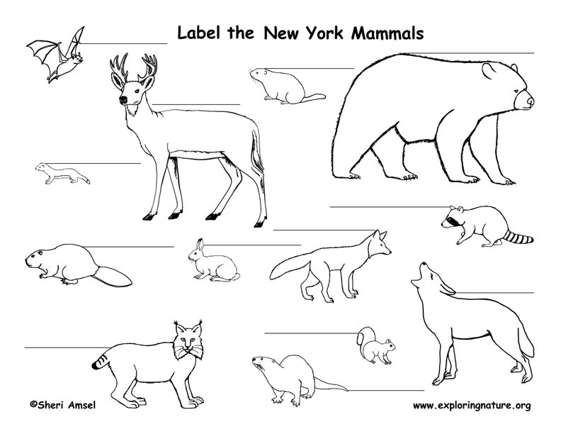 New York mammals labeling