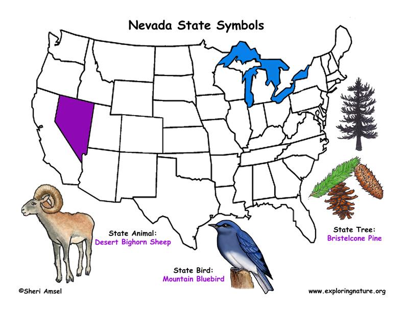 Nevada Habitats Mammals Birds Amphibians Reptiles