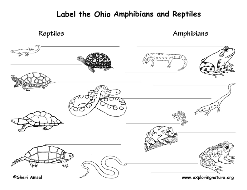 Ohio amphibians and reptiles labeling page