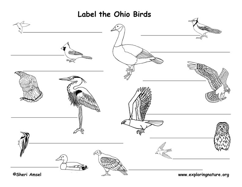 Ohio birds labeling page