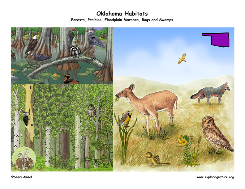 Oklahoma, forests, prairie, wetlands bald cypress
