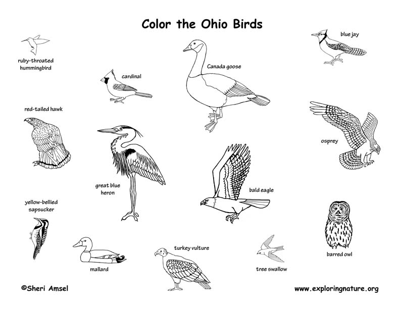 Ohio birds coloring page