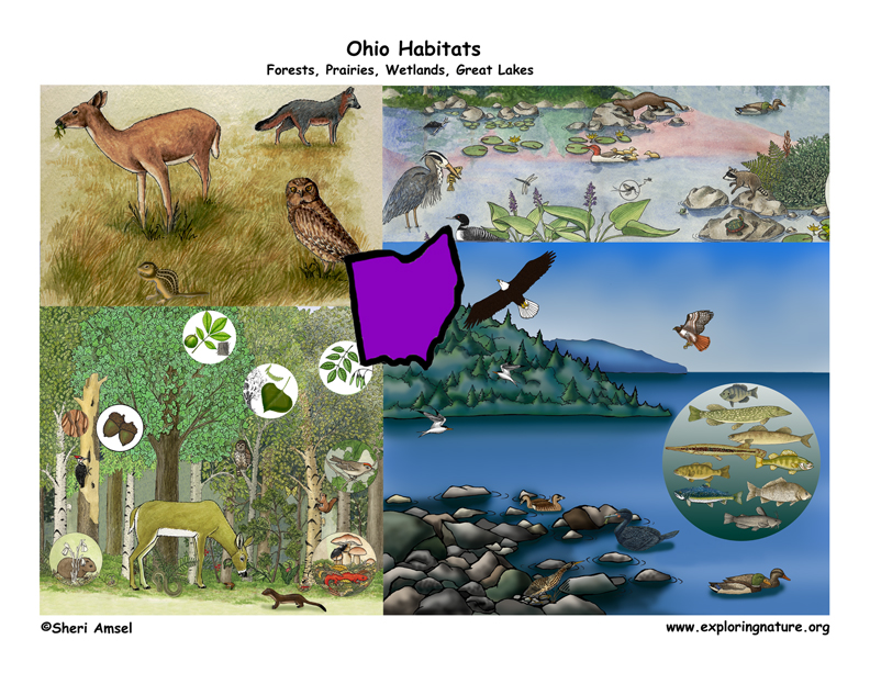 Ohio color poster, ohio habitats poster