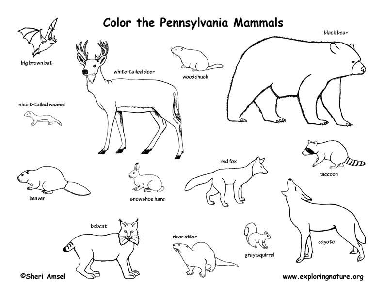 Pennsylvania Habitats Mammals Birds Amphibians Reptiles