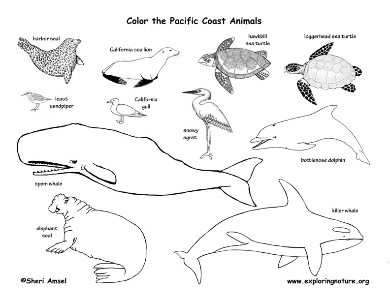 Alaskan Animals Coloring Pages | Coloring Page