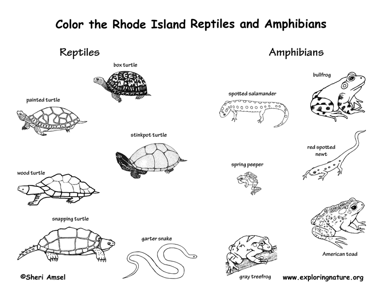 Rhode Island Amphibians and Reptiles coloring