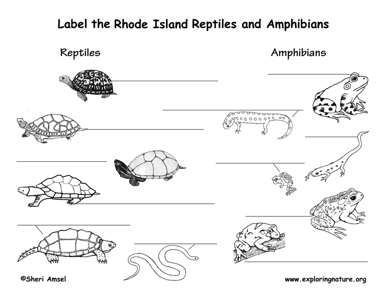 Rhode Island Amphibians and Reptiles labeling