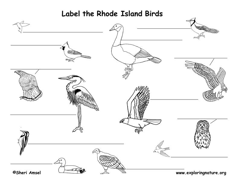Rhode Island birds labeling