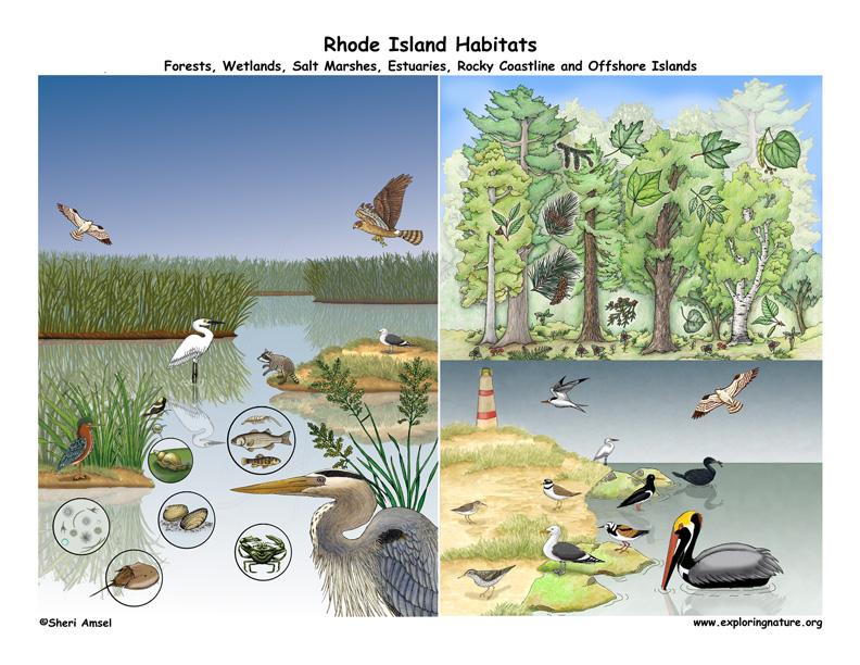 Rhode Island habitats poster