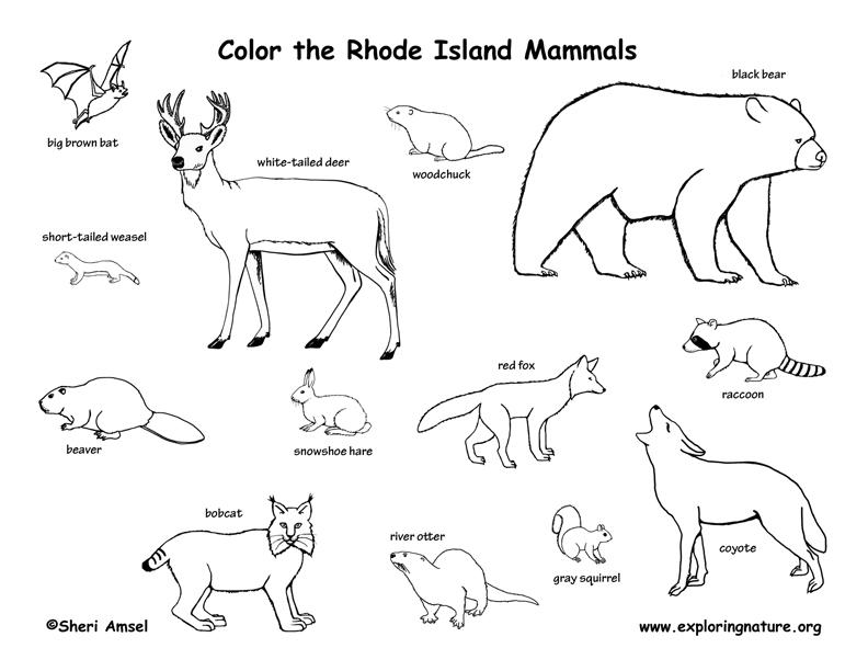 Rhode Island mammals coloring