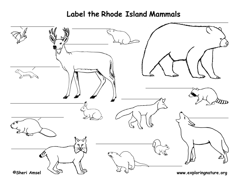 Rhode Island mammals labeling