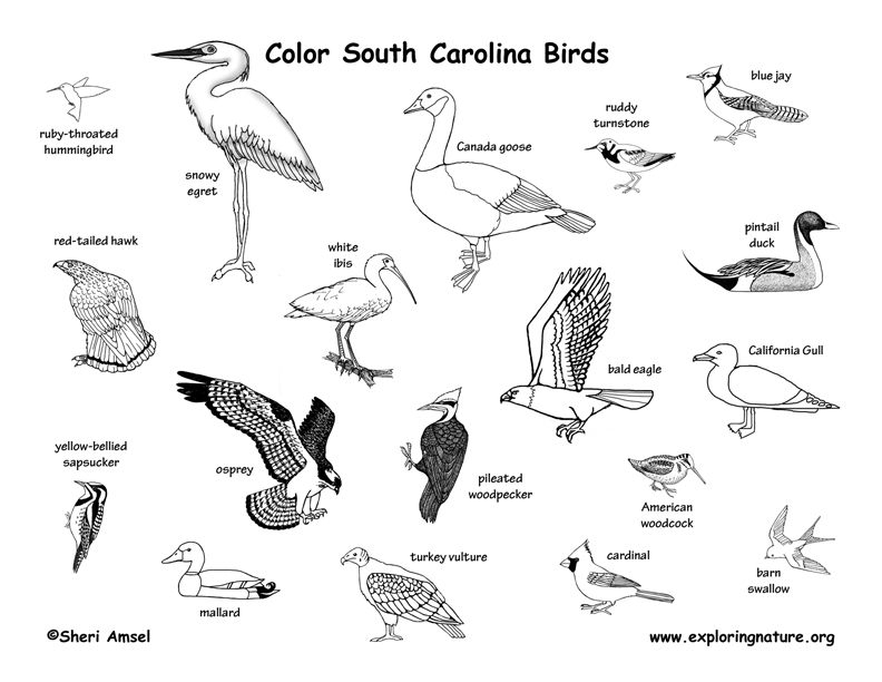 Coloring Birds Of This State