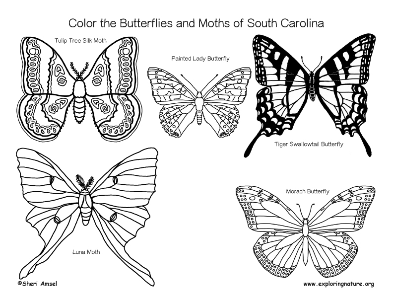 Coloring the butterflies and moths of South carolina