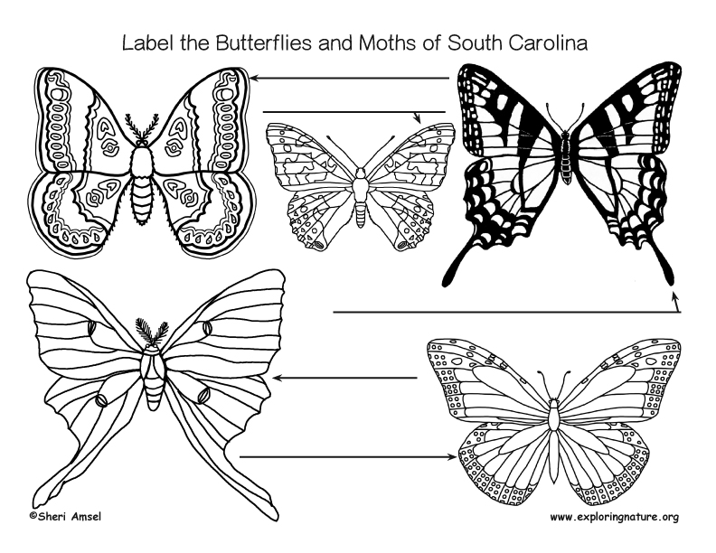 Labeling the butterflies and moths of South carolina