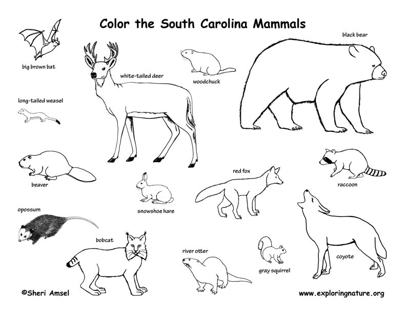 South Carolina Habitats Mammals Birds Amphibians Reptiles