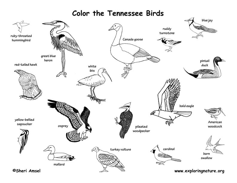 Tennessee Habitats Mammals Birds