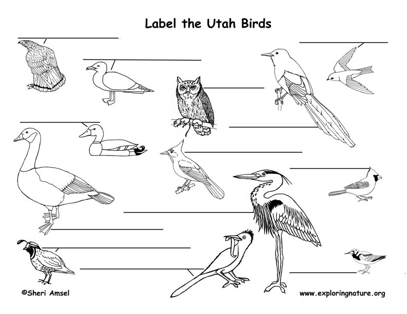 Utah birds labeling