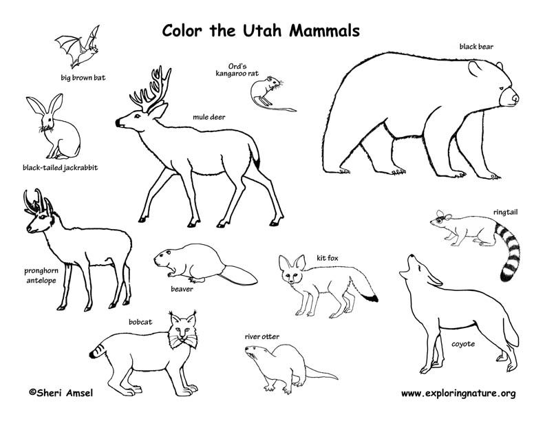 Utah habitats mammals birds amphibians reptiles for Mammal coloring pages
