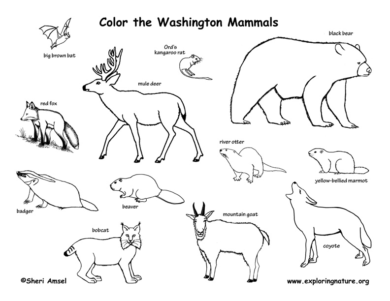 Coloring Pages Of Wetland Animals : Washington habitats mammals birds amphibians reptiles