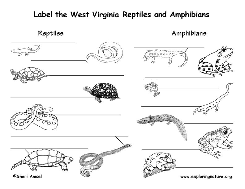 West Virginia Habitats, Mammals, Birds, Amphibians, Reptiles