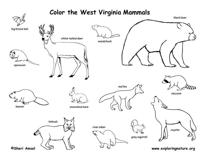 west virginia state coloring pages - photo#26