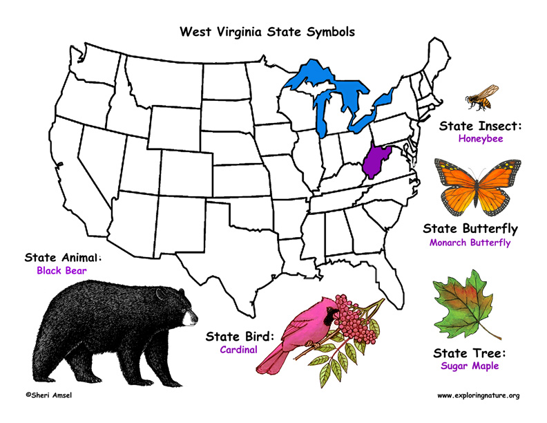 state symbols of this state west virginia