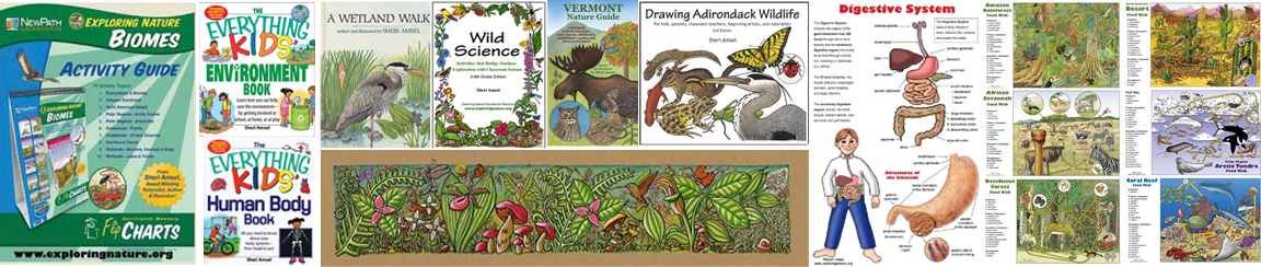 adirondack Illustrator art