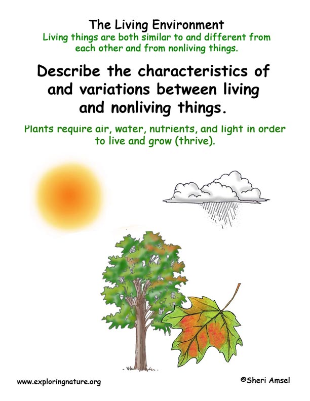 <b>Living Environment: Plants' Needs</b>