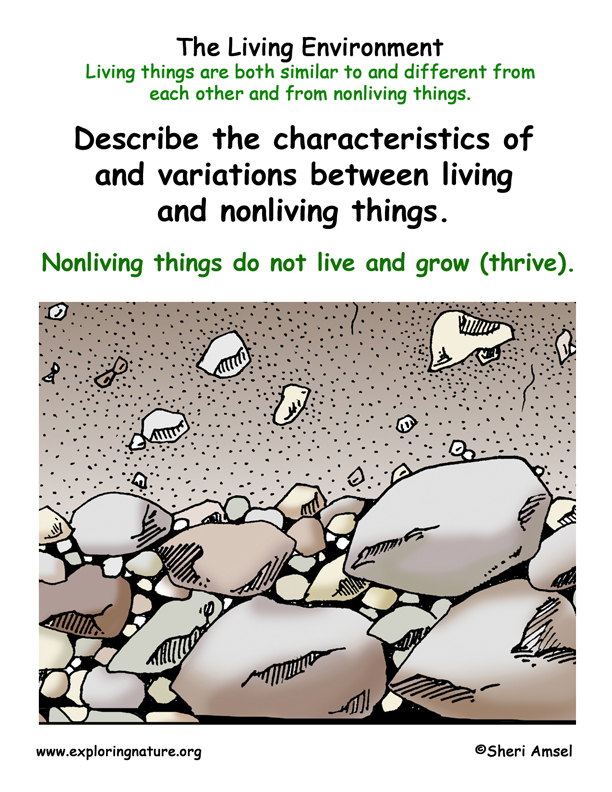 <b>Living Environment: Traits of Nonliving Things</b>