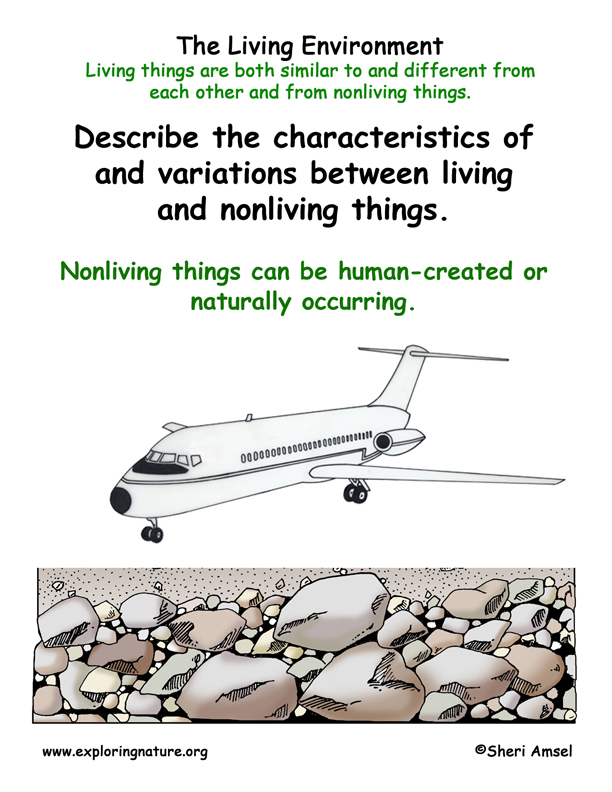 Living Environment Nonliving Things Man Made Or Natural
