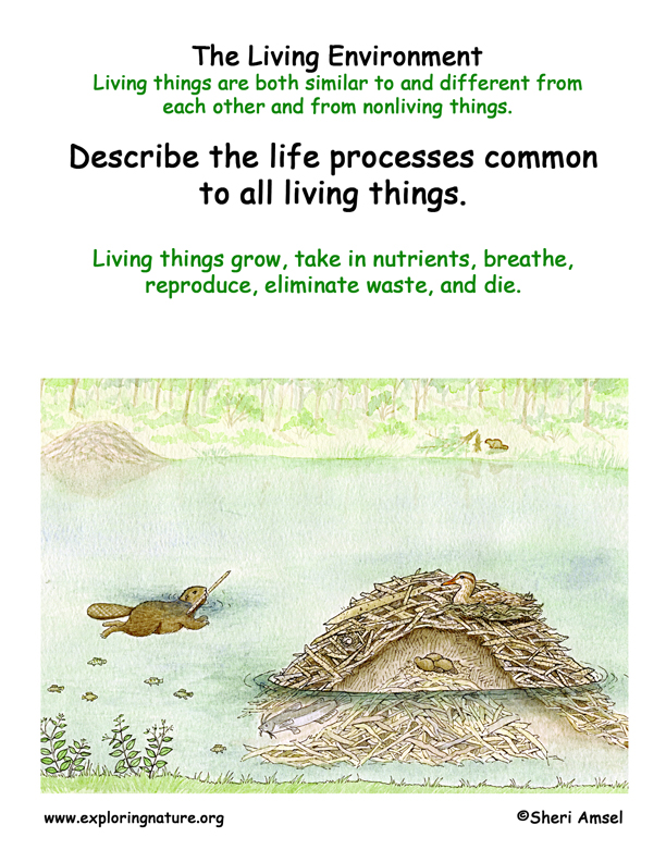 <b>Living Environment: Traits of Living Things </b>