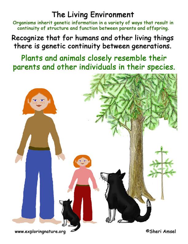 Living Environment: Resembling Parents