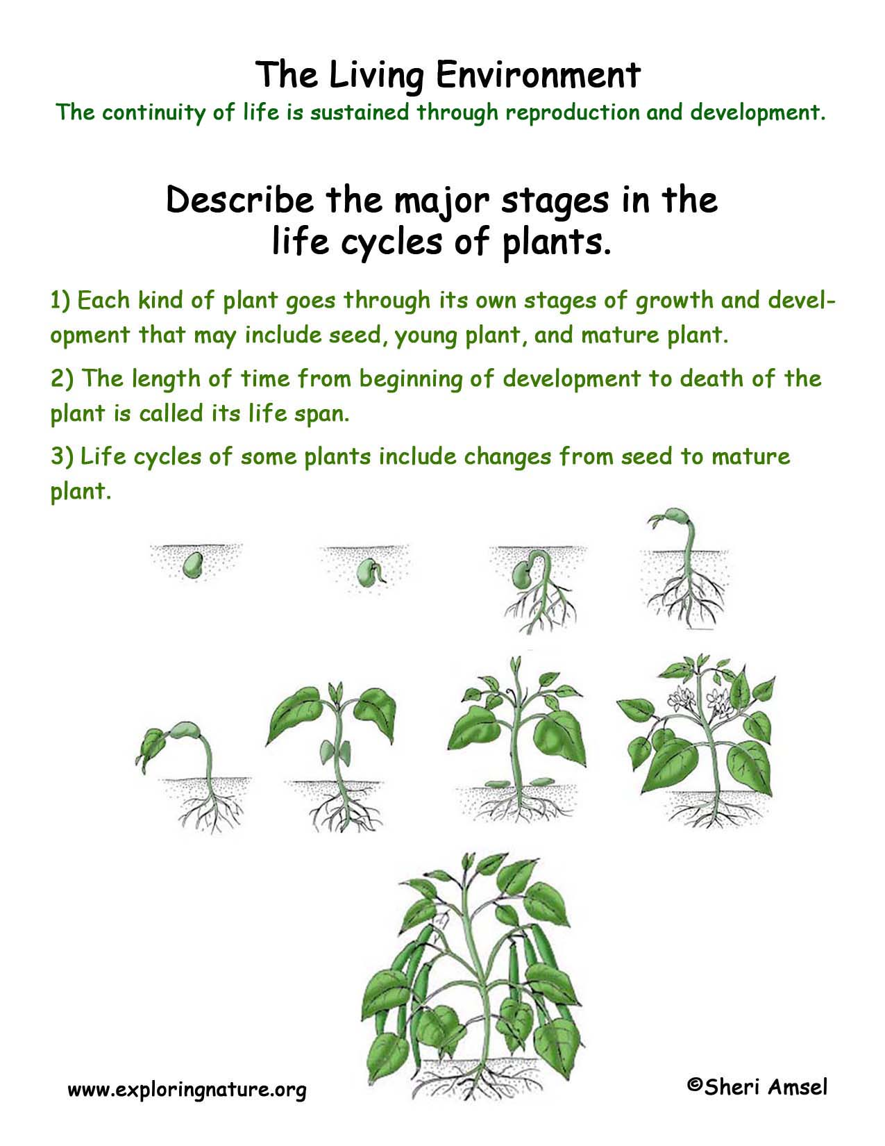 worksheet Plants Worksheet life cycle of a plant worksheet abitlikethis stages growth the plant