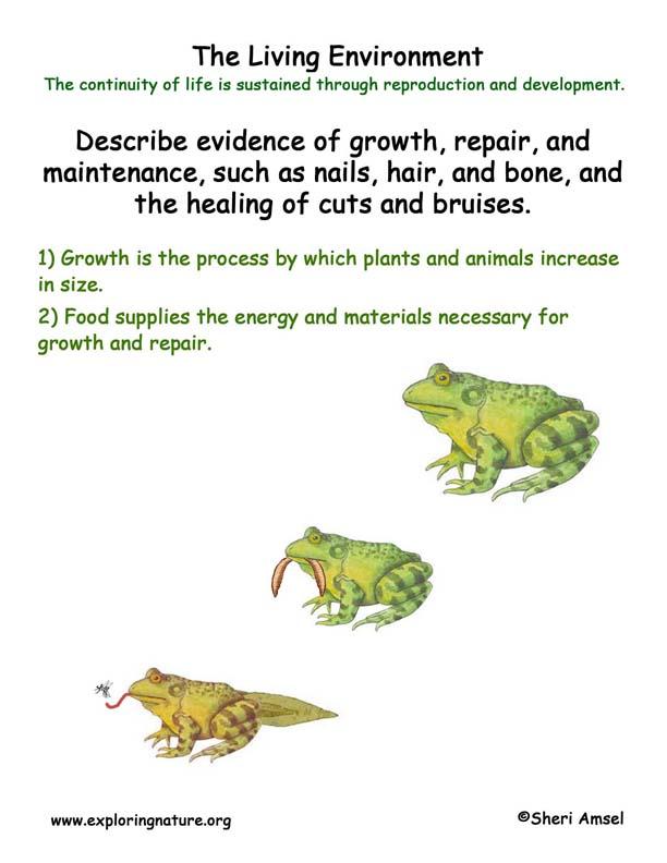 <b>Living Environment: Food & Growth</b>
