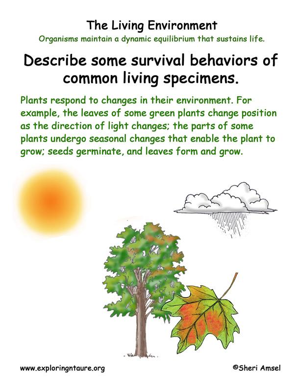 <b>Living Environment: Plant Adaptations</b>
