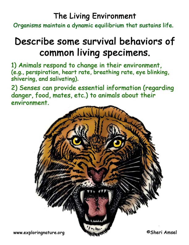 <b> Living Environment: Animal Adaptations</b>