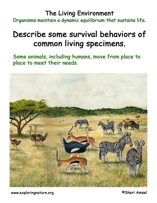 <b> Living Environment: Animal Migration</b>